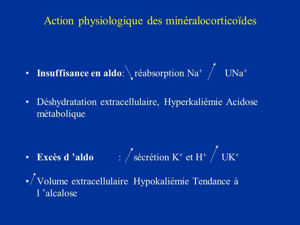 Action physiologique des minéralocorticoïdes Insuffisance en aldo: réabsorption Na + UNa + Déshydratation extracellulaire, Hyperkaliémie Acidose métab
