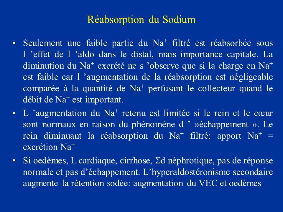 Réabsorption du Sodium Seulement une faible partie du Na + filtré est réabsorbée sous l effet de l aldo dans le distal, mais importance capitale. La d