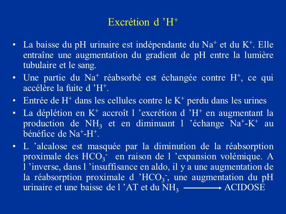 Excrétion d H + La baisse du pH urinaire est indépendante du Na + et du K +. Elle entraîne une augmentation du gradient de pH entre la lumière tubulai