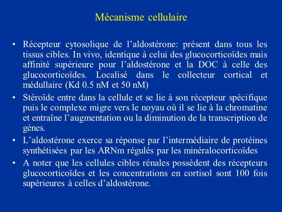 Mécanisme cellulaire Récepteur cytosolique de laldostérone: présent dans tous les tissus cibles. In vivo, identique à celui des glucocorticoïdes mais