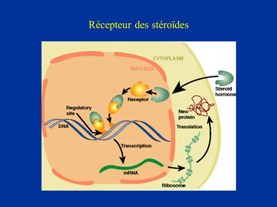 Récepteur des stéroïdes