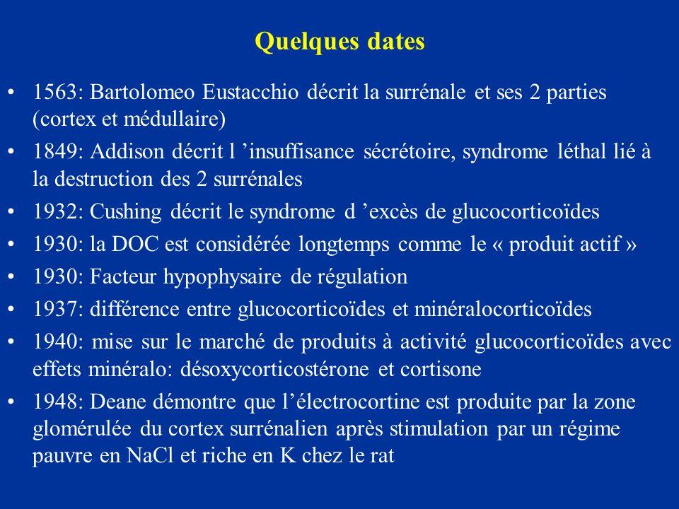 Régulation de la synthèse La production daldostérone est essentiellement sous la dépendance: –Du système rénine-angiotensine –De la concentration en potassium Et plus accessoirement –De lACTH –De la sérotonine Certaines étapes de la synthèse, en particulier la synthèse de DOC (dans les 3 zones) sont sous la dépendance de lACTH et lactivité sexerce sur la fasciculée Les composés en C18 qui proviennent de la glomérulée (18-OH- Cortisol, 18-OH-Corticostérone, 18-oxo-Cortisol) sont sous la dépendance du SRA et de la kaliémie dont leffet sexerce aussi à la phase initiale de la synthèse dans la glomérulée