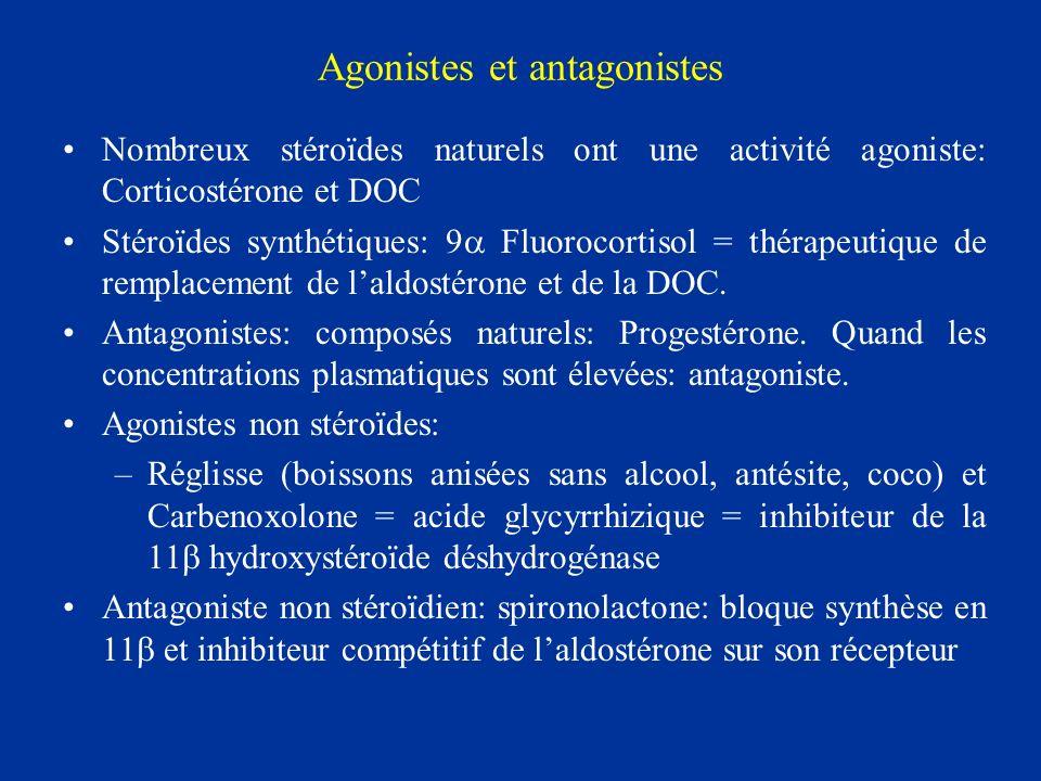 Agonistes et antagonistes Nombreux stéroïdes naturels ont une activité agoniste: Corticostérone et DOC Stéroïdes synthétiques: 9 Fluorocortisol = thér