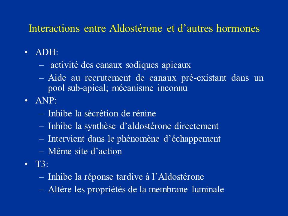 Interactions entre Aldostérone et dautres hormones ADH: – activité des canaux sodiques apicaux –Aide au recrutement de canaux pré-existant dans un poo