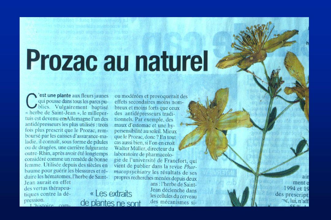 Hypericum perforatum (Hypericaceae)