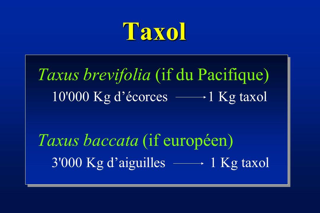 Taxus baccata (Taxaceae) taxol