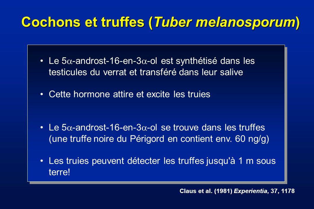 Pourquoi les cochons recherchent-ils les truffes (Tuber melanosporum)?