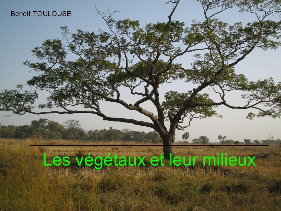 Les végétaux et leur milieux Benoît TOULOUSE