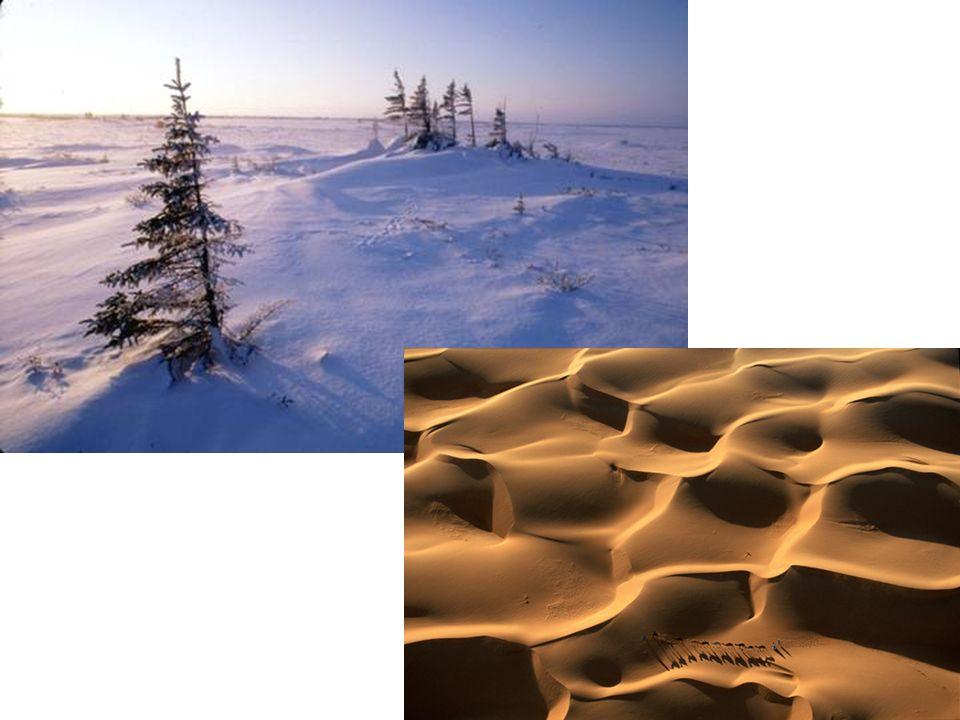 1 La chorologie Cest aussi létude de laire de distribution dune seul espèce et des modalités doccupation de celle -ci Exemple : Comment une espèce dissémine ses graines ?