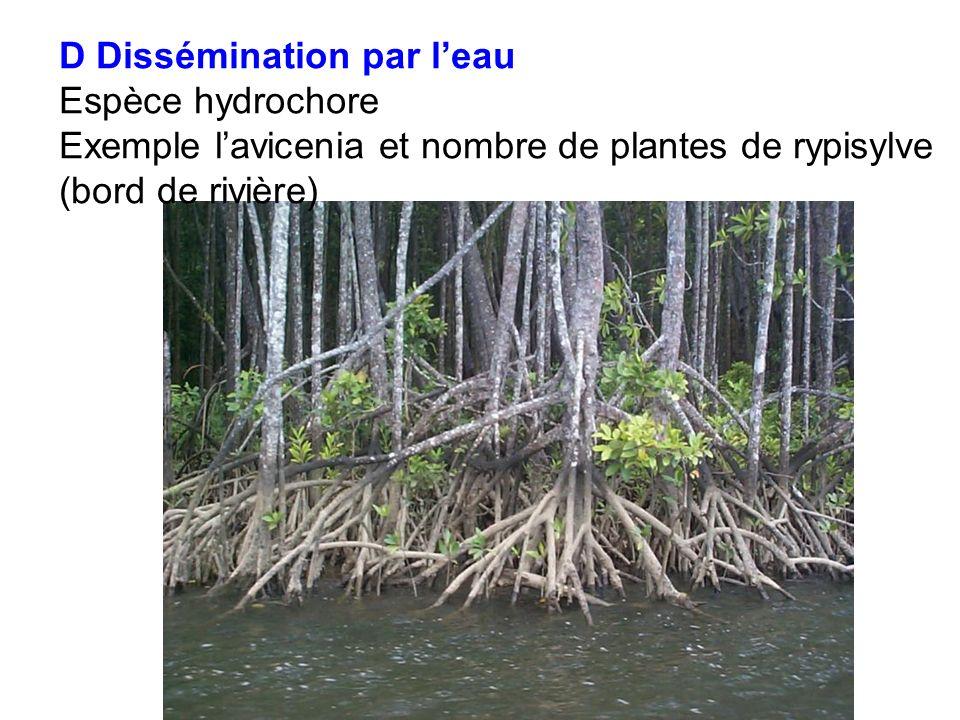 D Dissémination par leau Espèce hydrochore Exemple lavicenia et nombre de plantes de rypisylve (bord de rivière)