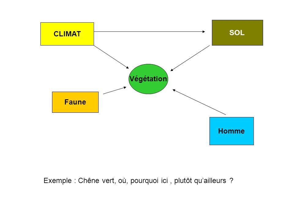 Végétation CLIMAT SOL Homme Exemple : Chêne vert, où, pourquoi ici, plutôt quailleurs ? Faune