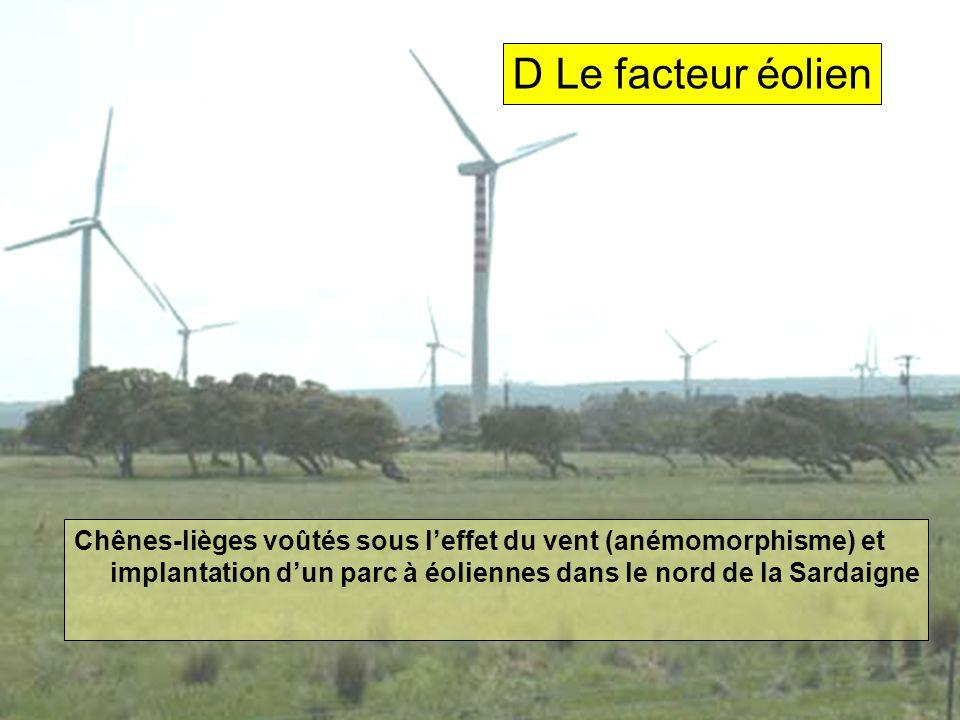 Chênes-lièges voûtés sous leffet du vent (anémomorphisme) et implantation dun parc à éoliennes dans le nord de la Sardaigne D Le facteur éolien
