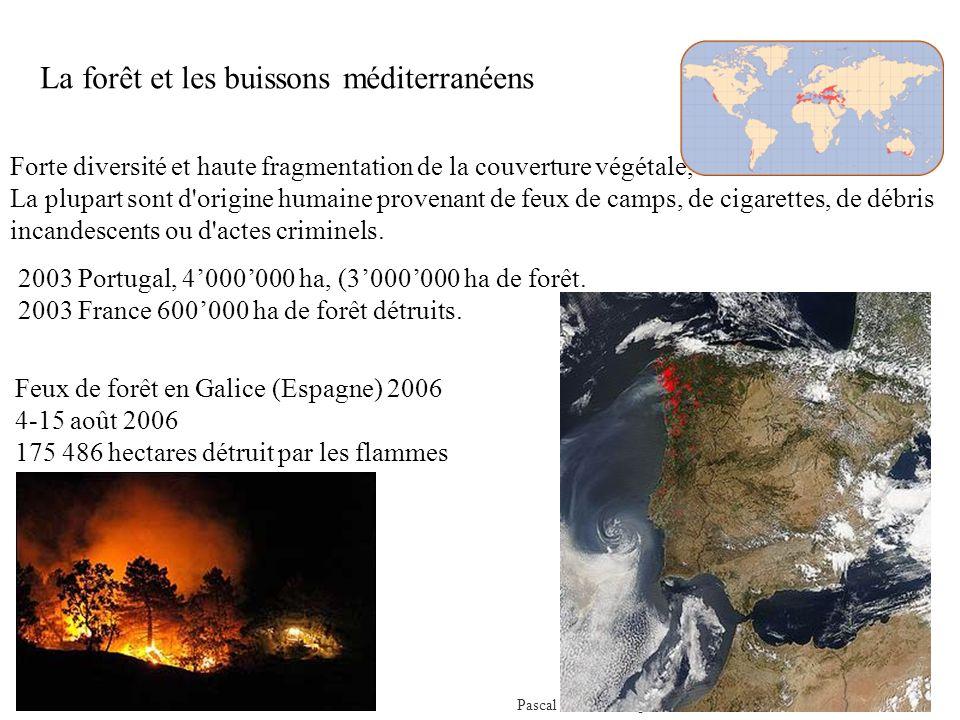 Pascal Peduzzi, Impacts des feux de forêt sur lenvironnement Forte diversité et haute fragmentation de la couverture végétale, La plupart sont d origine humaine provenant de feux de camps, de cigarettes, de débris incandescents ou d actes criminels.