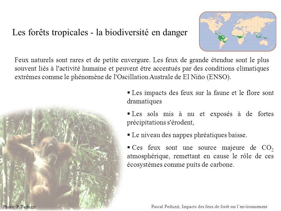 Pascal Peduzzi, Impacts des feux de forêt sur lenvironnement Situation des feux en Indonésie (31 octobre 2006) Sources: http://www.nea.gov.sg/cms/mss/gif/rghz.gif 1997/98 en Indonésie un total de 9.7 million d ha, principalement de forêt tropicale ont été la proie des flammes.