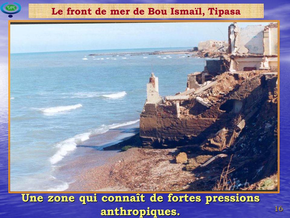 16 Une zone qui connaît de fortes pressions anthropiques. Le front de mer de Bou Ismaïl, Tipasa