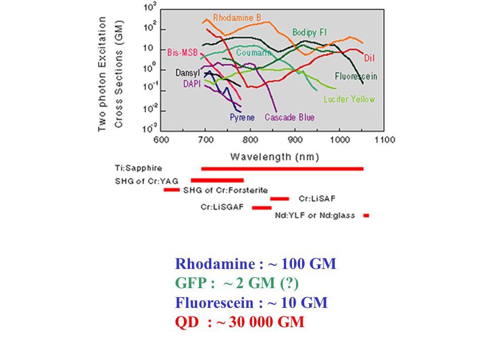 Rhodamine : ~ 100 GM GFP : ~ 2 GM (?) Fluorescein : ~ 10 GM QD : ~ 30 000 GM