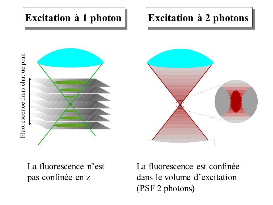 Excitation à 1 photon La fluorescence nest pas confinée en z Excitation à 2 photons La fluorescence est confinée dans le volume dexcitation (PSF 2 pho