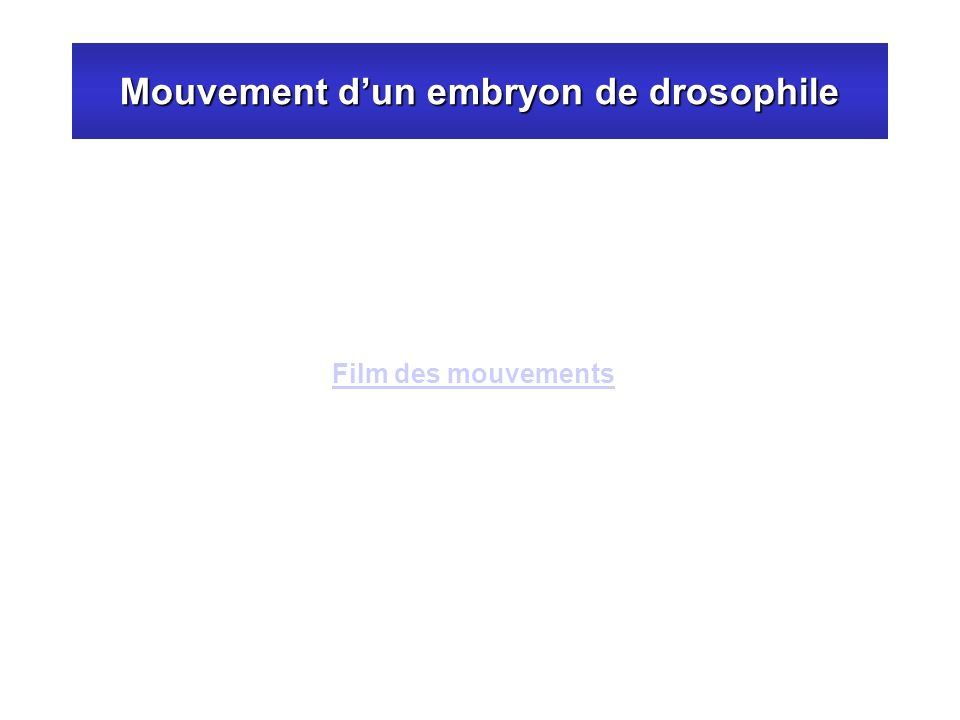 Mouvement dun embryon de drosophile Film des mouvements