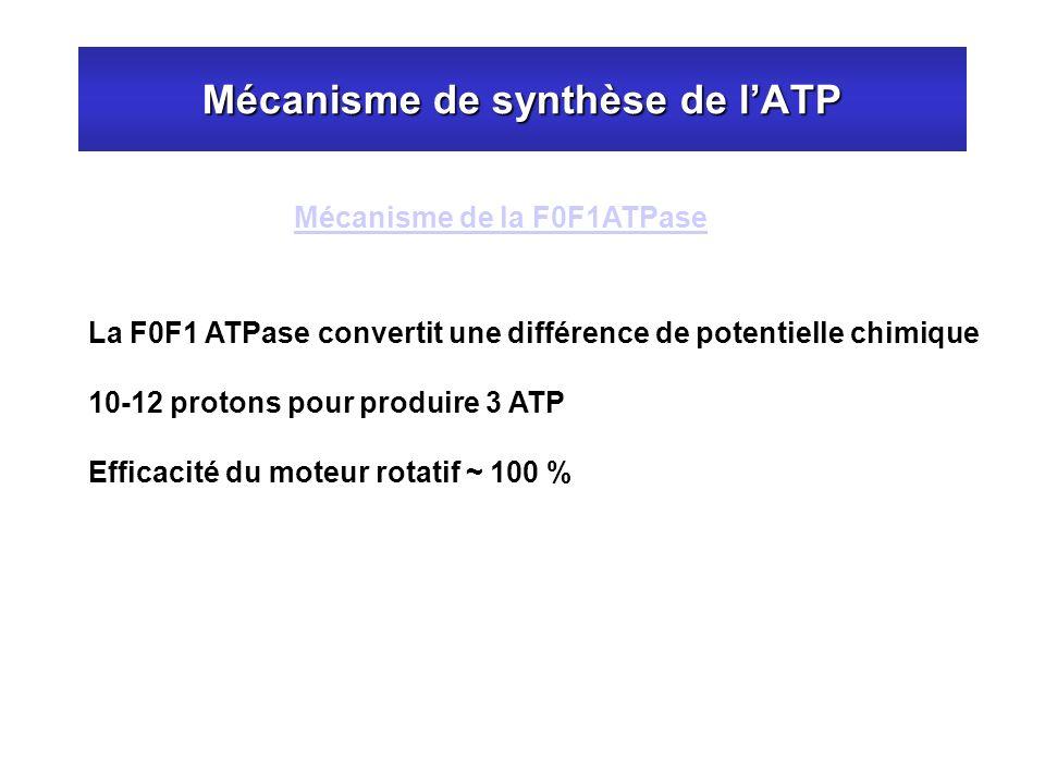 Mécanisme de synthèse de lATP Mécanisme de la F0F1ATPase La F0F1 ATPase convertit une différence de potentielle chimique 10-12 protons pour produire 3