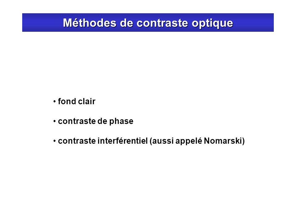 Méthodes de contraste optique fond clair contraste de phase contraste interférentiel (aussi appelé Nomarski)