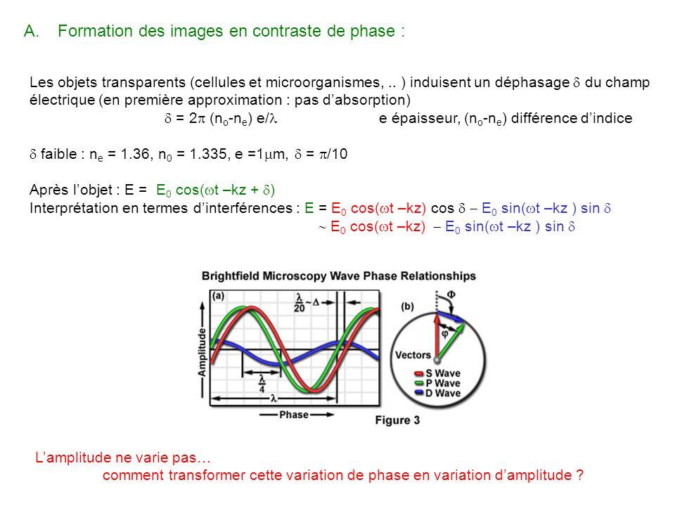 Les objets transparents (cellules et microorganismes,.. ) induisent un déphasage du champ électrique (en première approximation : pas dabsorption) = 2