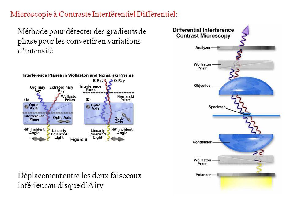 Microscopie à Contraste Interférentiel Différentiel: Méthode pour détecter des gradients de phase pour les convertir en variations dintensité Déplacem