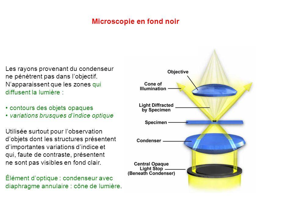 Microscopie en fond noir Les rayons provenant du condenseur ne pénètrent pas dans lobjectif. Napparaissent que les zones qui diffusent la lumière : co
