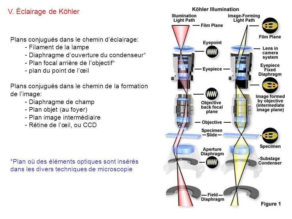 Plans conjugués dans le chemin déclairage: - Filament de la lampe - Diaphragme douverture du condenseur* - Plan focal arrière de lobjectif* - plan du
