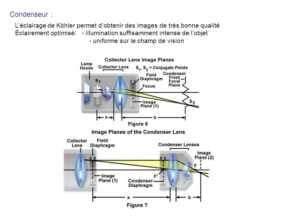 Condenseur : Léclairage de Köhler permet dobtenir des images de très bonne qualité Éclairement optimisé: - illumination suffisamment intense de lobjet