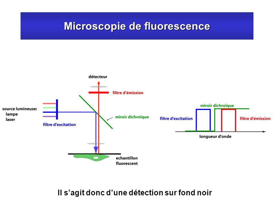 Microscopie de fluorescence Il sagit donc dune détection sur fond noir