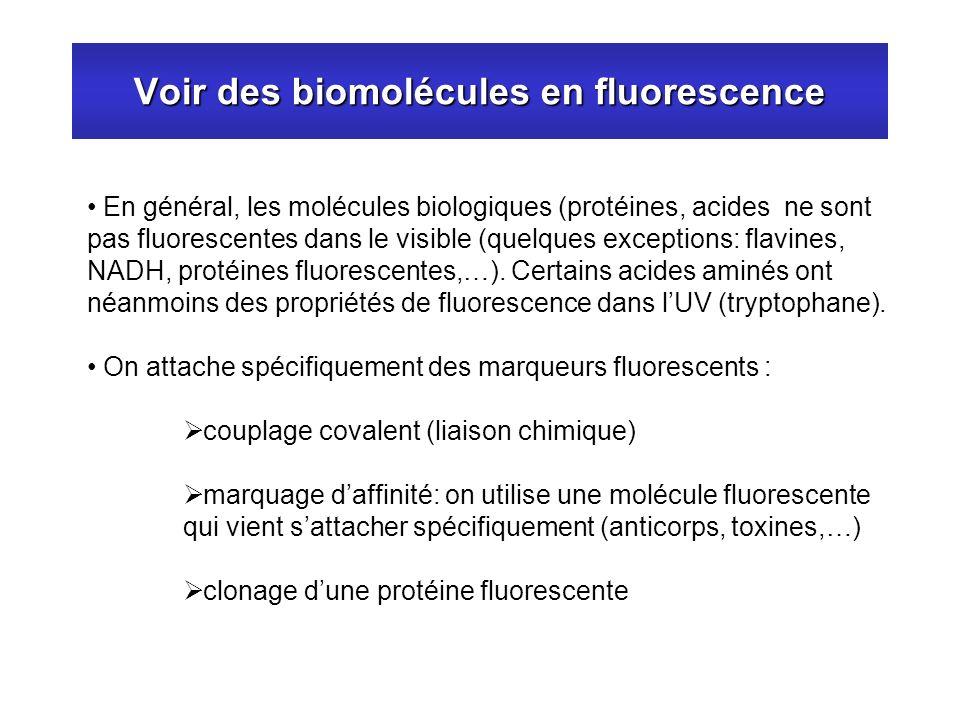 Voir des biomolécules en fluorescence En général, les molécules biologiques (protéines, acides ne sont pas fluorescentes dans le visible (quelques exc