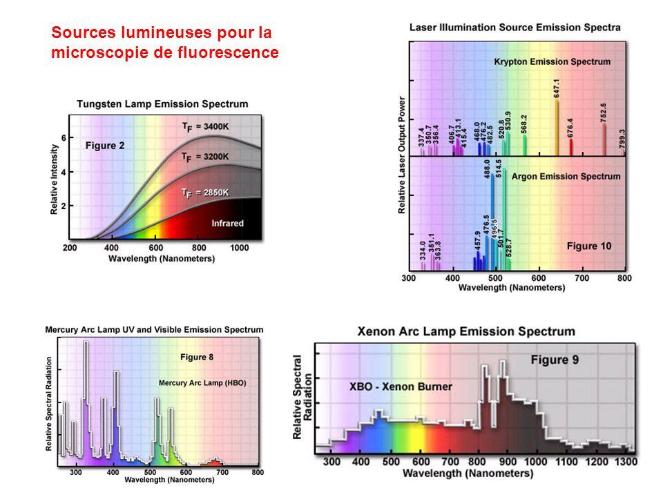 Sources lumineuses pour la microscopie de fluorescence