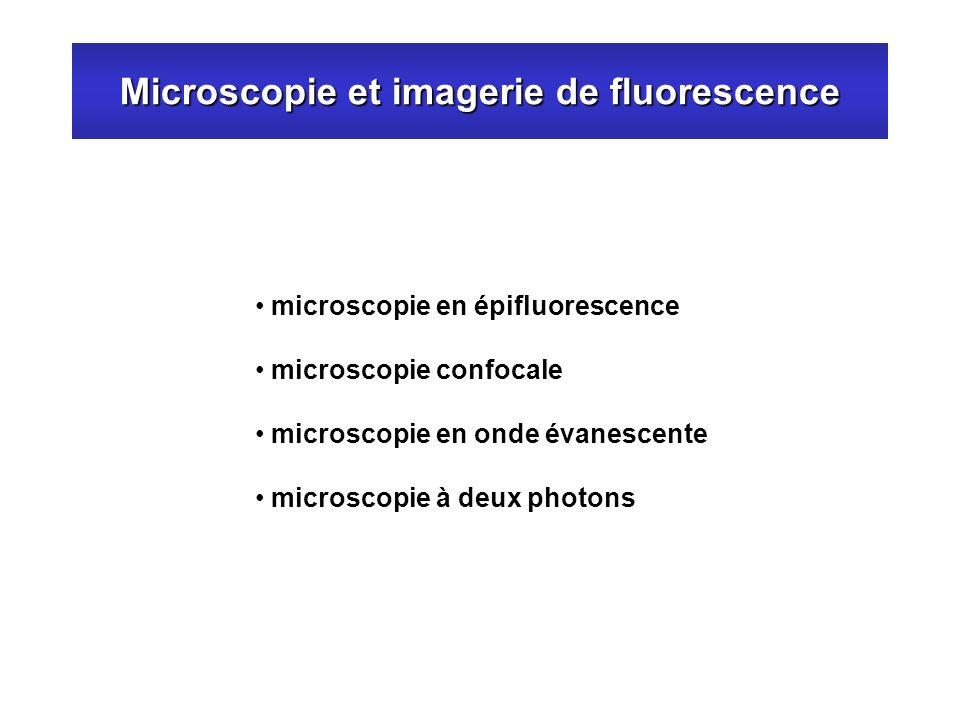 Microscopie et imagerie de fluorescence microscopie en épifluorescence microscopie confocale microscopie en onde évanescente microscopie à deux photon