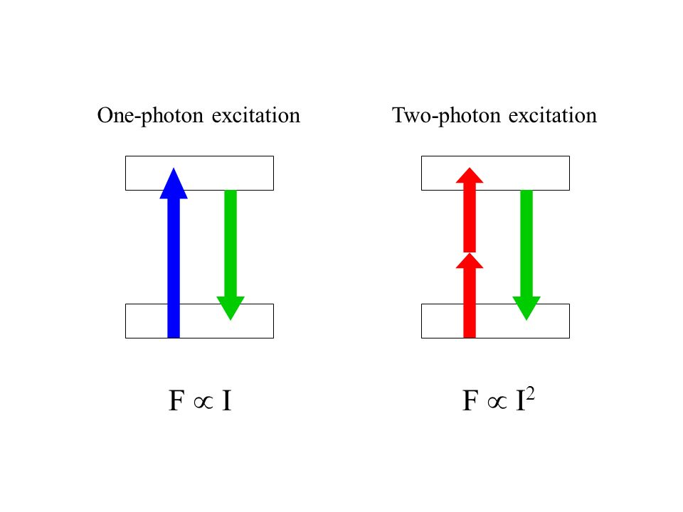 One-photon excitationTwo-photon excitation F IF I 2