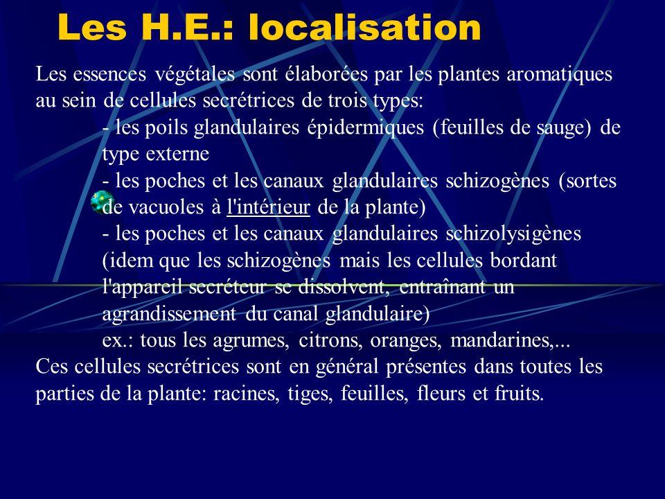 Les H.E.: localisation Les essences végétales sont élaborées par les plantes aromatiques au sein de cellules secrétrices de trois types: - les poils glandulaires épidermiques (feuilles de sauge) de type externe - les poches et les canaux glandulaires schizogènes (sortes de vacuoles à l intérieur de la plante) - les poches et les canaux glandulaires schizolysigènes (idem que les schizogènes mais les cellules bordant l appareil secréteur se dissolvent, entraînant un agrandissement du canal glandulaire) ex.: tous les agrumes, citrons, oranges, mandarines,...