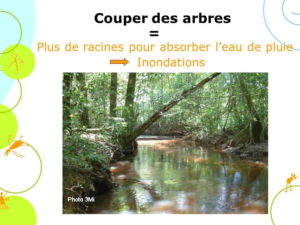 Plus de racines pour absorber leau de pluie Inondations Couper des arbres =