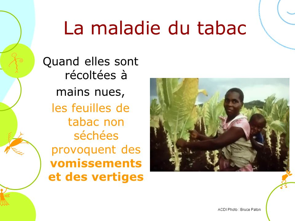 La maladie du tabac ACDI Photo : Bruce Paton Quand elles sont récoltées à mains nues, les feuilles de tabac non séchées provoquent des vomissements et
