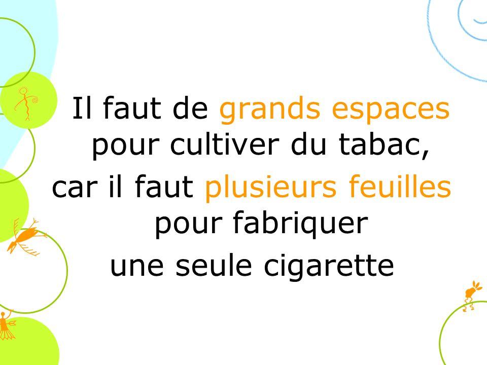 Il faut de grands espaces pour cultiver du tabac, car il faut plusieurs feuilles pour fabriquer une seule cigarette