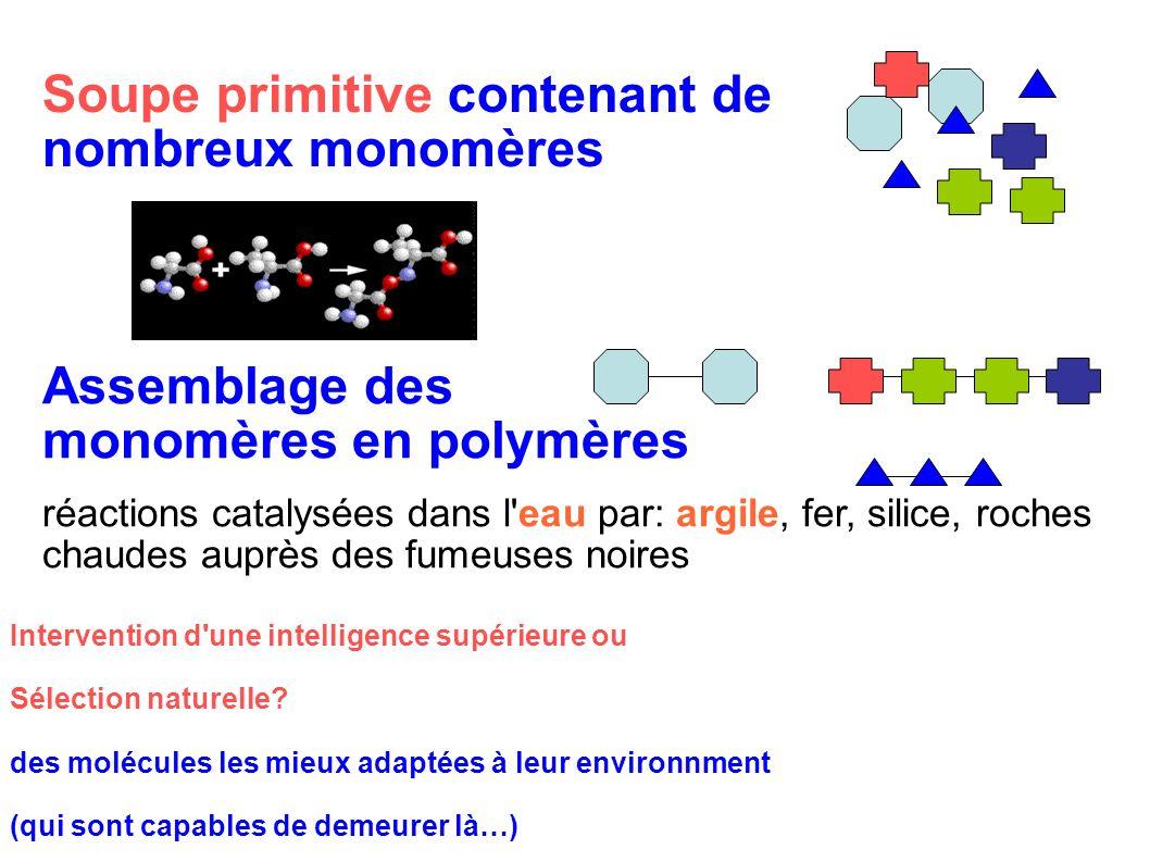 Intervention d'une intelligence supérieure ou Sélection naturelle? des molécules les mieux adaptées à leur environnment (qui sont capables de demeurer