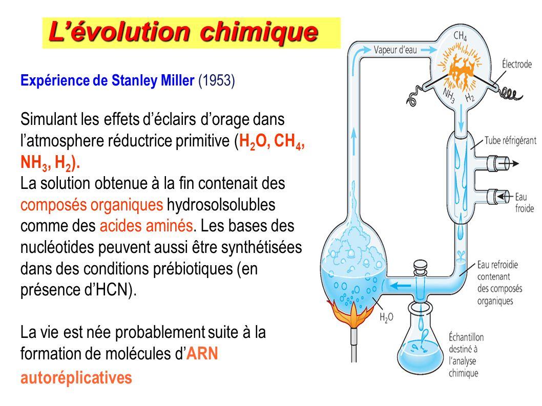 Expérience de Stanley Miller (1953) Simulant les effets déclairs dorage dans latmosphere réductrice primitive ( H 2 O, CH 4, NH 3, H 2 ). La solution