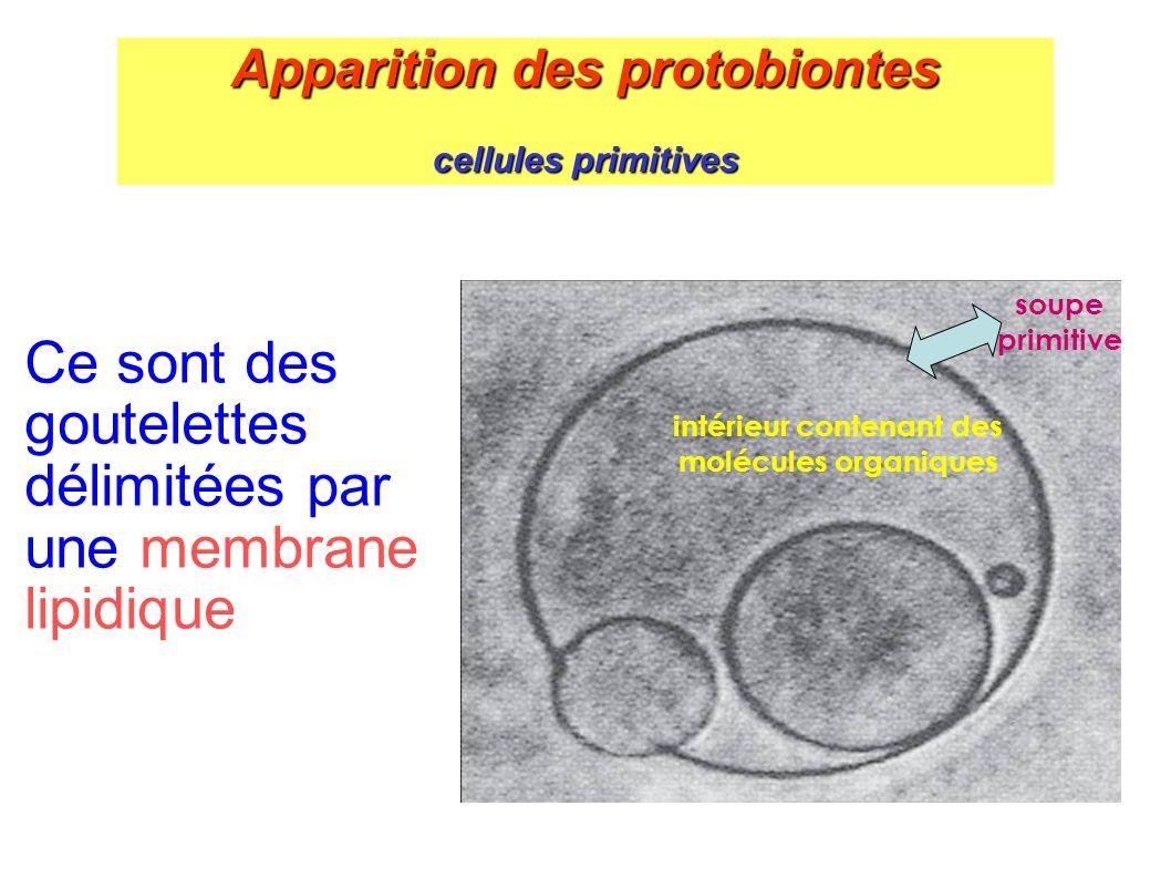 Apparition des protobiontes cellules primitives Ce sont des goutelettes délimitées par une membrane lipidique intérieur contenant des molécules organi