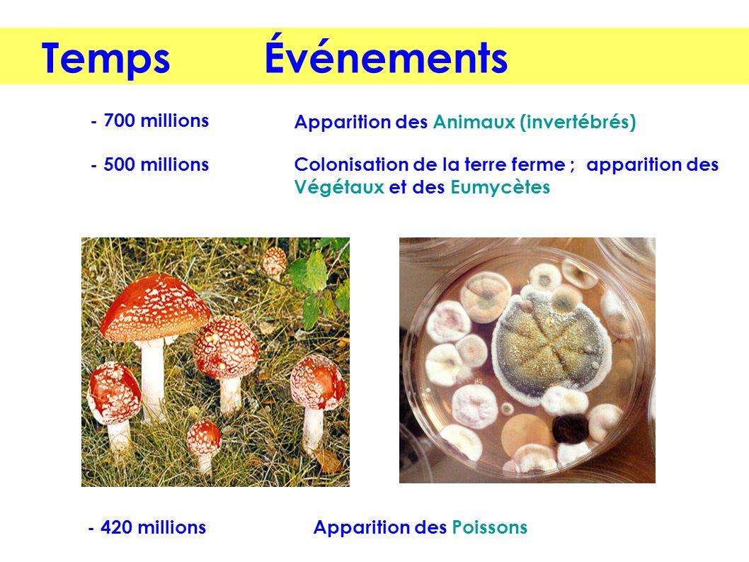 - 700 millions Colonisation de la terre ferme ; apparition des Végétaux et des Eumycètes Apparition des Animaux (invertébrés) - 500 millions Apparitio