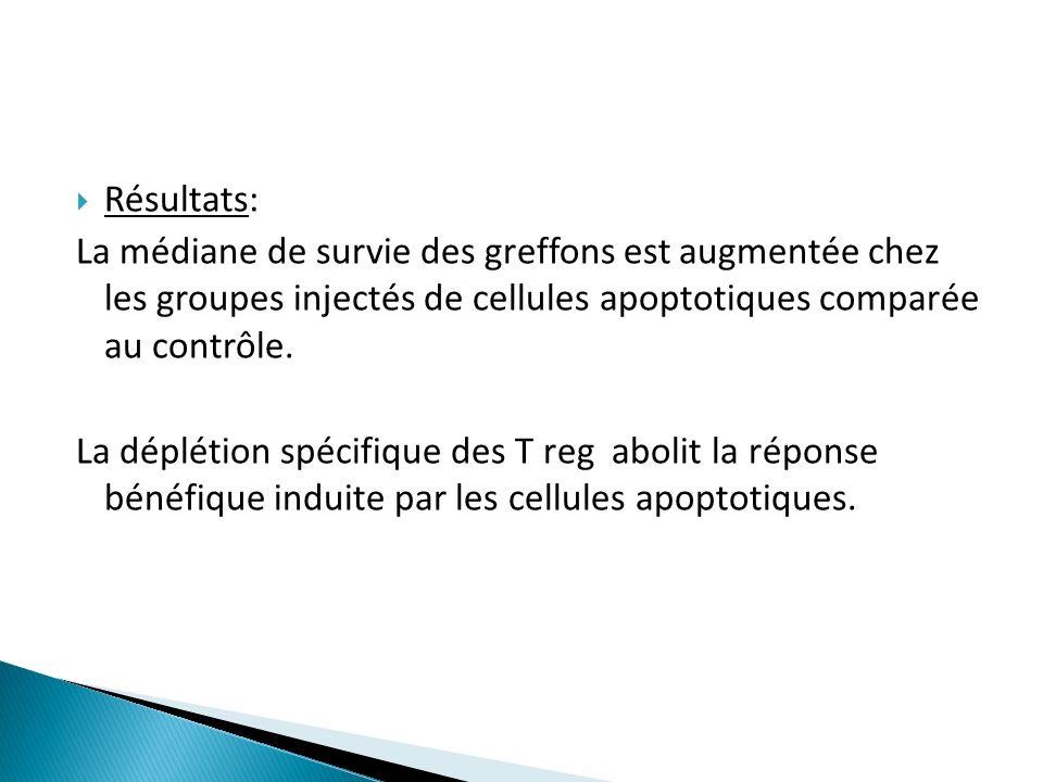 Résultats: La médiane de survie des greffons est augmentée chez les groupes injectés de cellules apoptotiques comparée au contrôle. La déplétion spéci