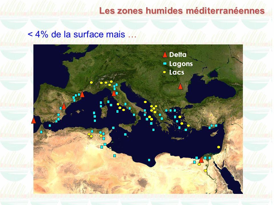< 4% de la surface mais … Delta Lagons Lacs Les zones humides méditerranéennes