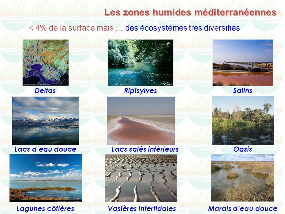 Deltas Lagunes côtières Lacs deau douce Marais deau douceVasières intertidales Salins Lacs salés intérieurs Ripisylves Oasis < 4% de la surface mais …