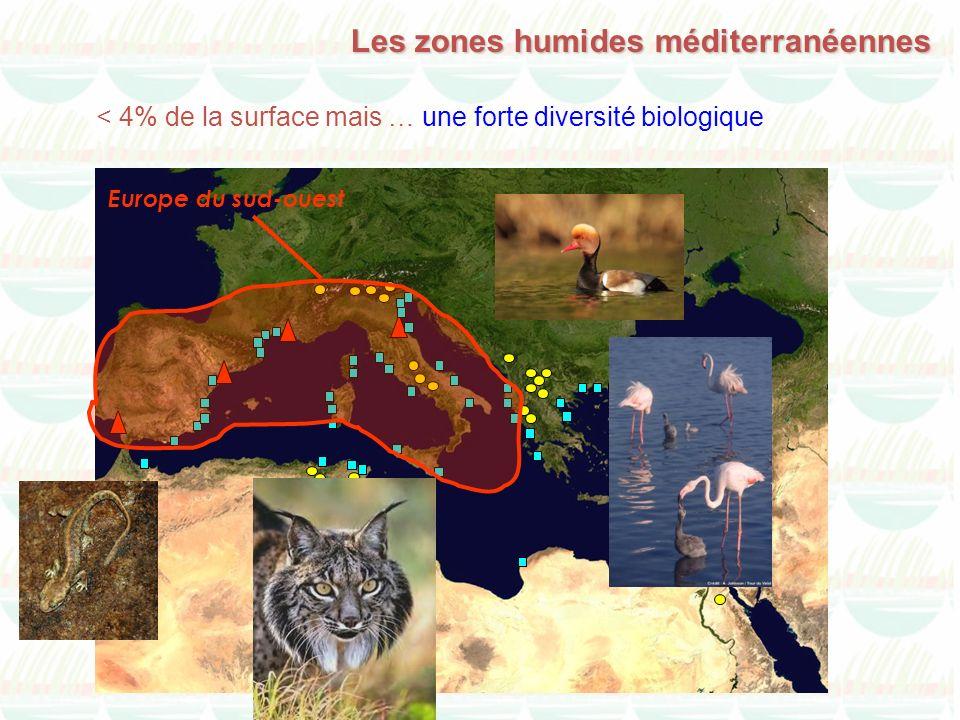 < 4% de la surface mais … une forte diversité biologique Les zones humides méditerranéennes Europe du sud-ouest