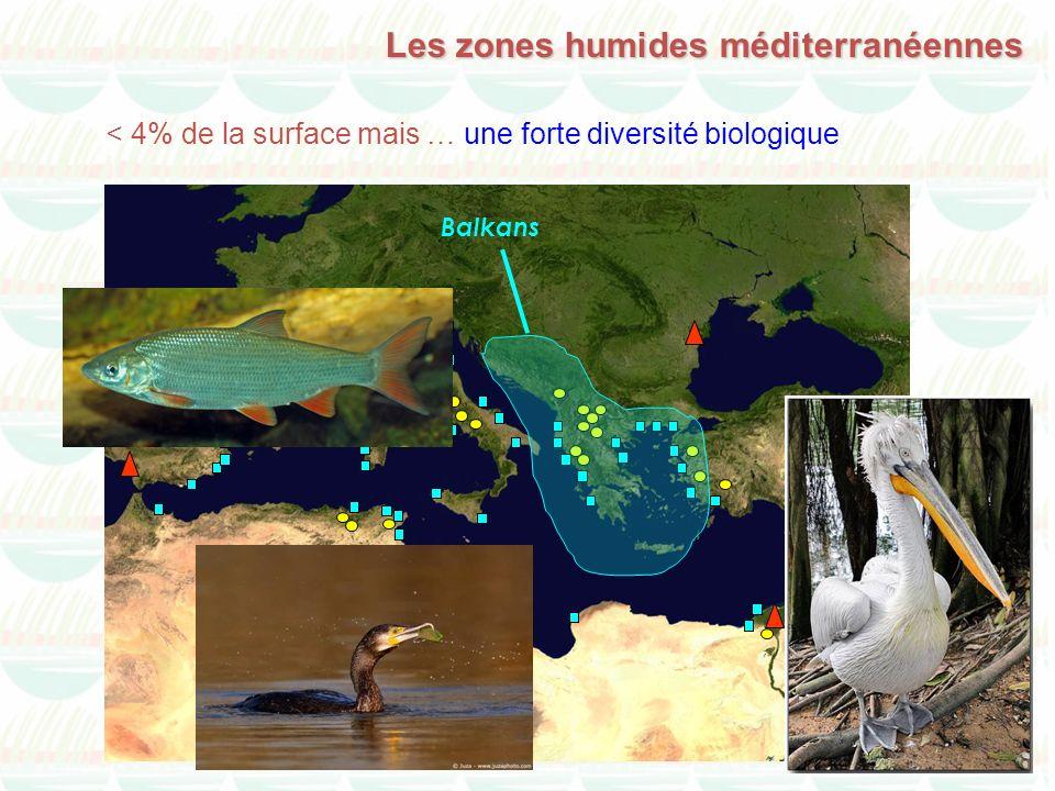 Les zones humides méditerranéennes Balkans < 4% de la surface mais … une forte diversité biologique