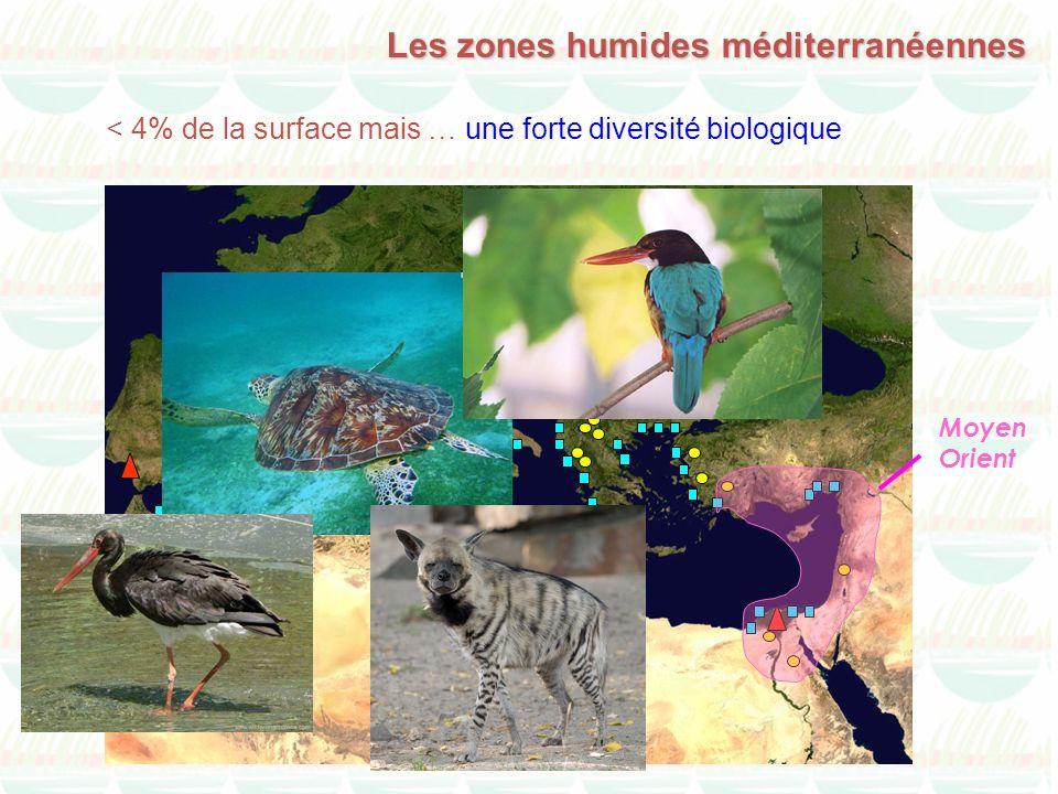 Les zones humides méditerranéennes Moyen Orient < 4% de la surface mais … une forte diversité biologique