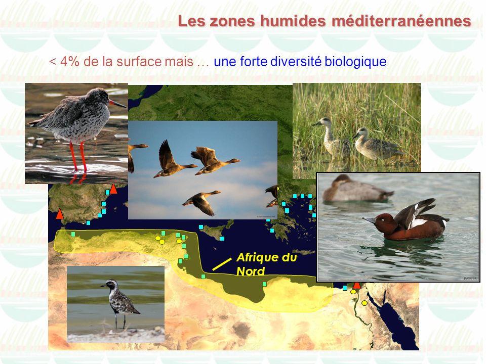 Les zones humides méditerranéennes Afrique du Nord < 4% de la surface mais … une forte diversité biologique
