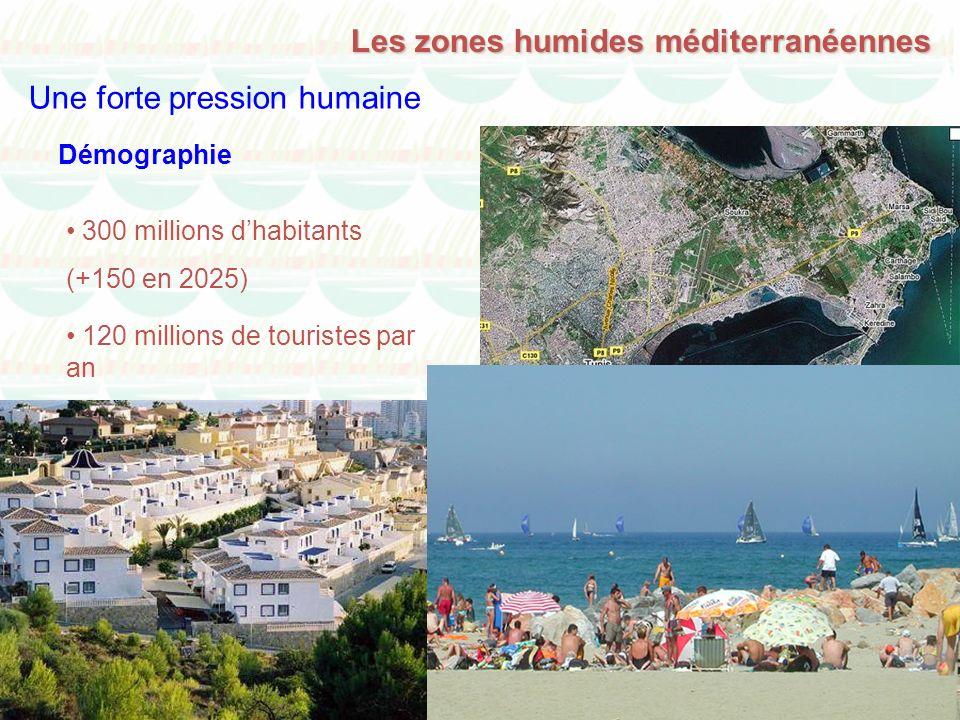 Les zones humides méditerranéennes Une forte pression humaine 300 millions dhabitants (+150 en 2025) Démographie 120 millions de touristes par an